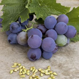 Grapeseed extract a key ingredient in Dynavyte's Purple Magic